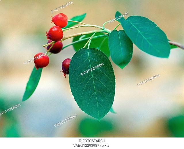 nature, plants, leaf, plant, film