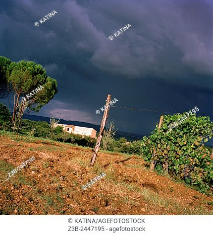 Stormy skies over vineyards in the Tuscan countryside in summer, Tuscany, Italy, Europe