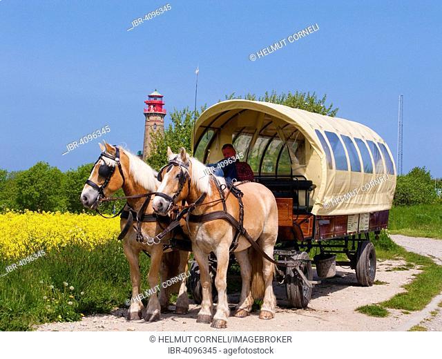 Horse-drawn carriage, Cape Arkona, rapeseed (Brassica napus), new lighthouse, North Cape, Peninsula Wittow, Rügen Island, Baltic Sea