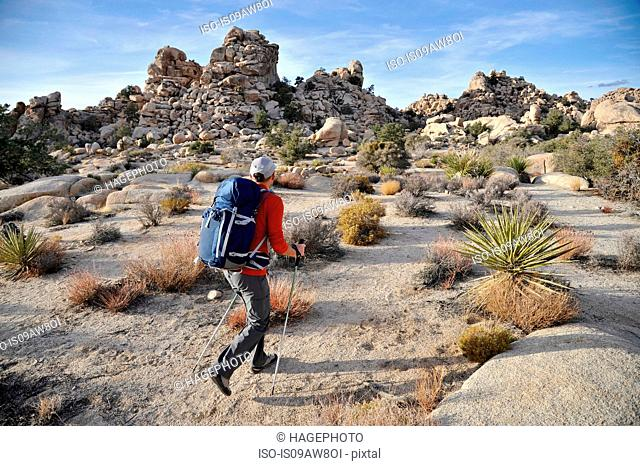 Hiker exploring Mojave Desert, Joshua Tree National Park, California