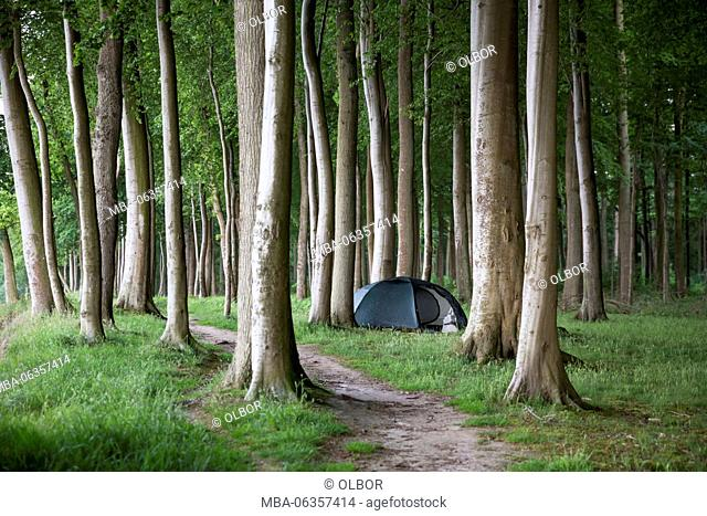 Denmark, Syddanmark, Broager, tent in the forest with beech trees on bivouac place by the way