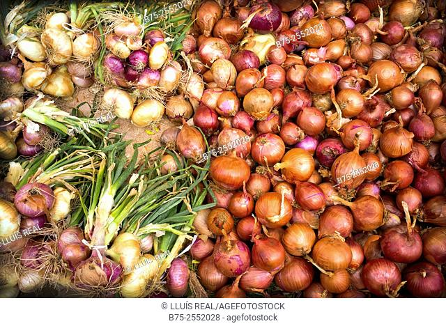 Close-up of ecological onions in the street market in Fez Medina, Morocco Africa