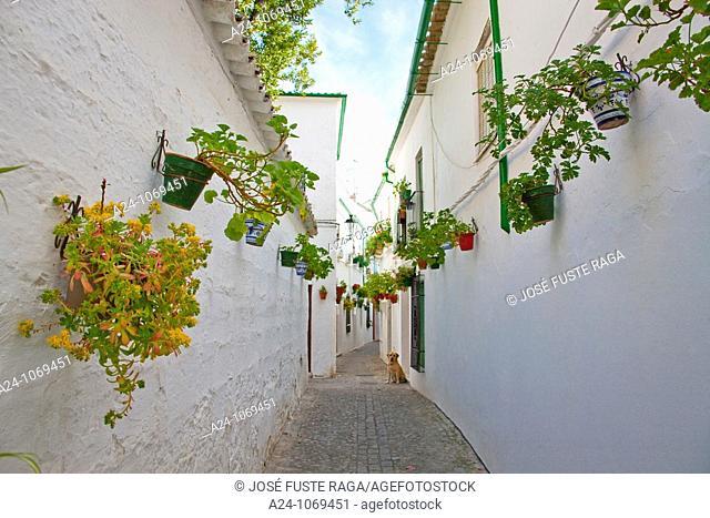 Street, Priego de Cordoba, Cordoba province, Andalusia, Spain