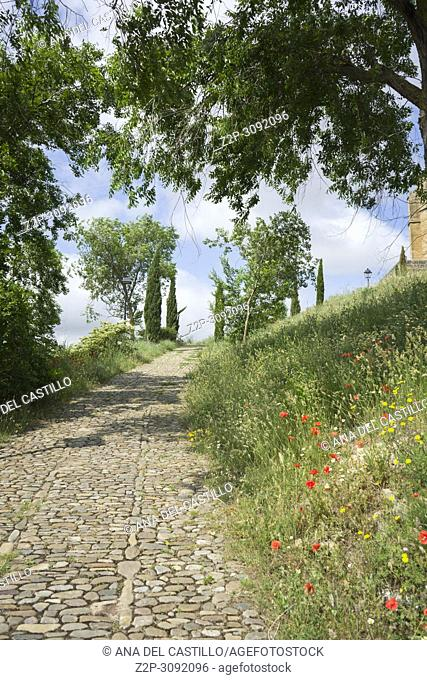 Spring flowers in San Vicente de la Sonsierra castle in La Rioja Spain