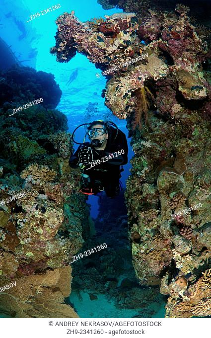 Diver looks at coral reef, Red Sea, Egypt, Africa