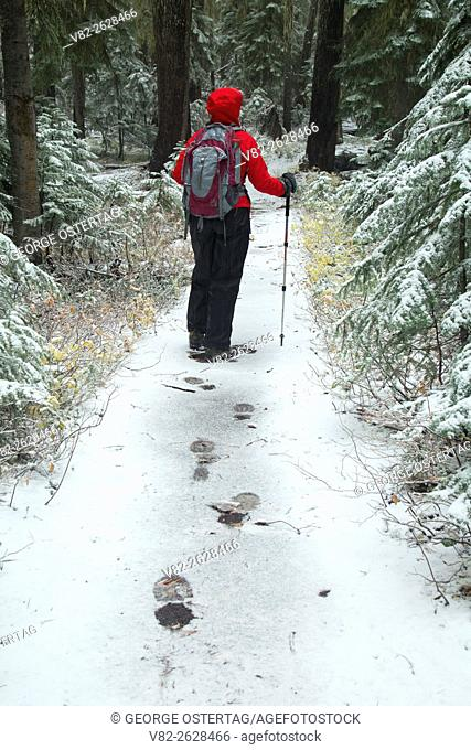 New snow on Indigo Lake Trail, Cascade Lakes Recreation Area, Willamette National Forest, Oregon