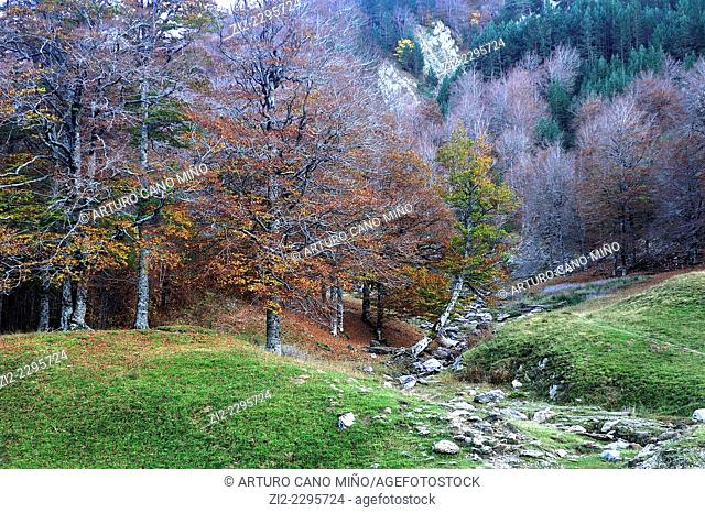 Forest of Tacheras, Valley of Anso. Huesca, Spain
