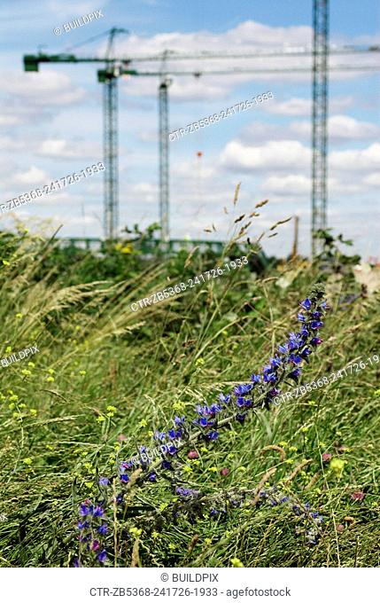 Wild flowers near the construction of the Olympic Stadium, Stratford, East London, UK