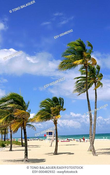 Fort Lauderdale Florida tropical beach with palm trees over blue sky