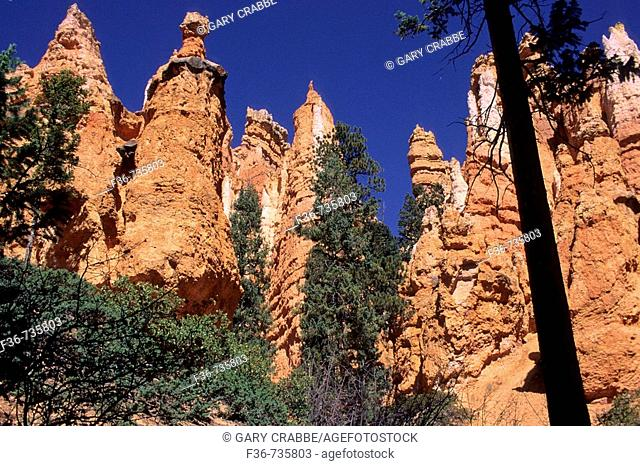 View of Hoodoos from trail down into Bryce Canyon, Bryce Canyon National Park, Utah, USA