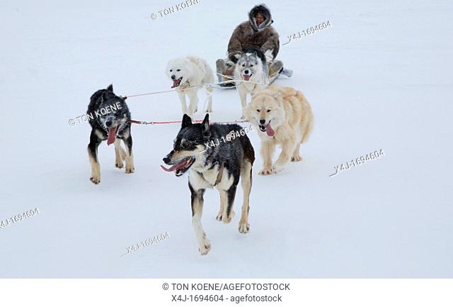 Gojahaven is a town in the far north of canada where 1000 IInuits are living Dogsledge is a traditional way of transport for the Inuits Howevere