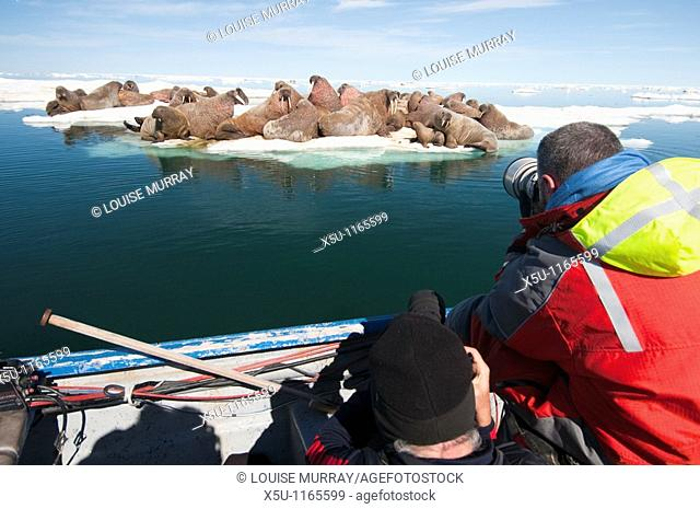 Arctic July 10 - 20 2010 Hall Beach, Foxe basin,Nunavut, Canadian High Arctic, Canada Arctic Kingdom walrus expedition  Tourists shooting video and...