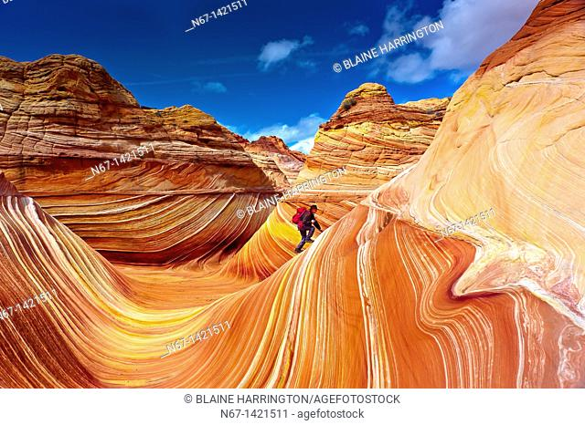 Hiker exploring 'The Wave', a 190 million year old Jurassic-age Navajo sandstone rock formation, Coyotte Buttes, Paria Canyon-Vermillion Cliffs Wilderness Area
