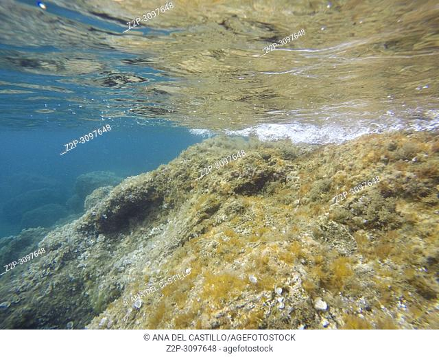Underwater image in Portman coast Cartagena Murcia Spain