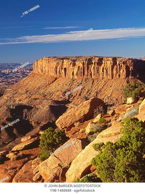 Scattered junipers and Junction Butte, view southwest from Grand View Point, Island in the Sky District, Canyonlands National Park, Utah, USA