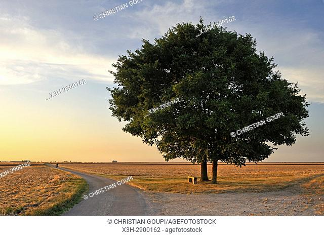 two isolated oak trees at Saint-Laurent-la-Gatine, Eure-et-Loir department, Centre-Val de Loire region, France, Europe