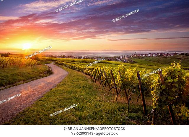 Sunrise over vineyards surrounding Zellenberg along the Route des Vins, Alsace, Haut-Rhin, France