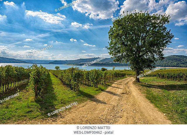 Italy, Corbara,view to vineyards and Lake Corbara in autumn