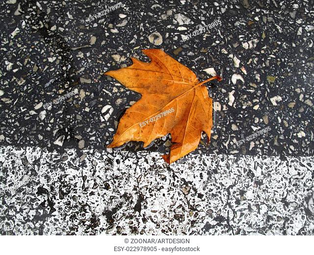 Autumn leaf on the road