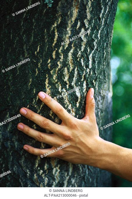 Hand touching tree trunk, close-up