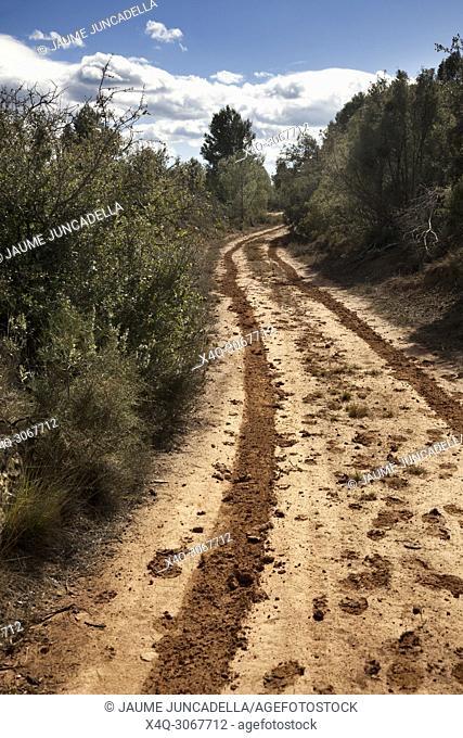 Way to Arenys de Lledó. Teruel province