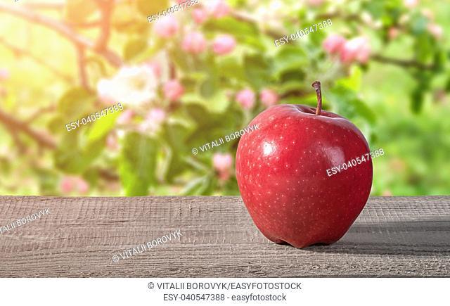 Red apple on a wooden table. Blooming apple orchard on a blurry background