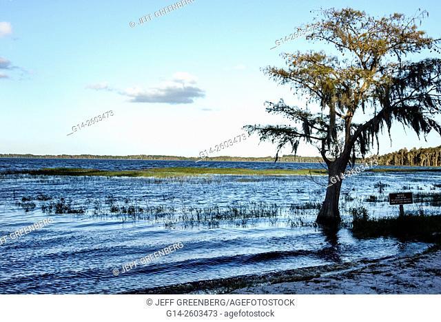 Florida, Clermont, Lake Louisa State Park, nature, natural scenery, cypress tree, Spanish moss