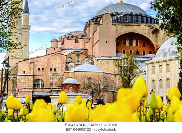 Traditional tulip Festival in Sultanahmet Square with view of Hagia Sophia,Greek orthodox Christian patriarchal basilica (church) on background and colorful...