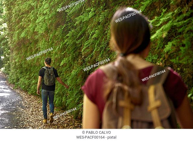 Spain, Canary Islands, La Palma, couple walking past lush green ferns in a forest