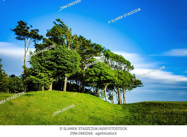 Windy spring afternoon at Chanctonbury Ring in South Downs National Park, West Sussex, England