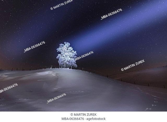Winter scenery by night, Germany, Bavaria, Allgäu, starry sky, tree