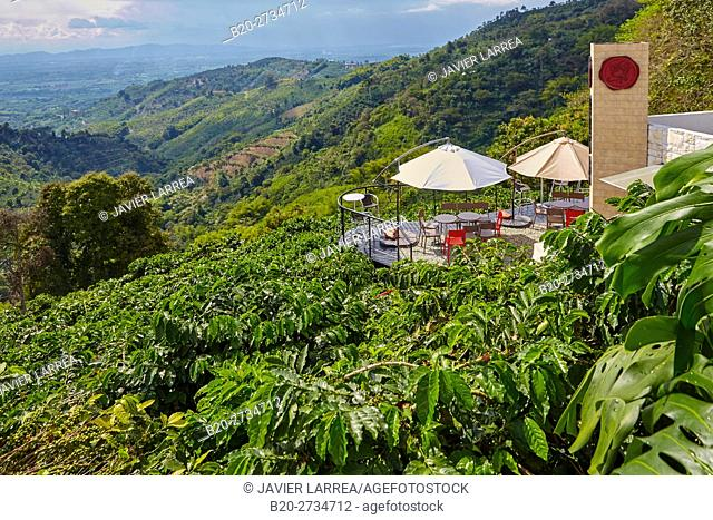 Terrace, Hacienda San Alberto, Cafetal, Coffee plantations, Coffee Cultural Landscape, Buenavista, Quindio, Colombia, South America