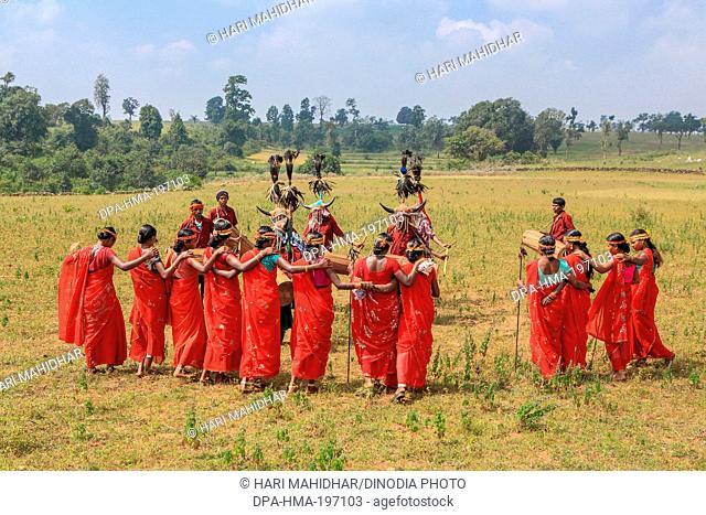 Bison horn dancers, bastar, chhattisgarh, india, asia