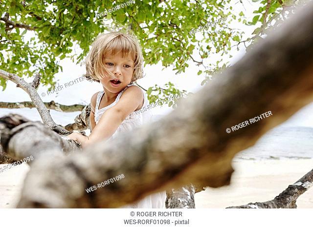 Thailand, Phi Phi Islands, Ko Phi Phi, little girl climbing on a tree on the beach
