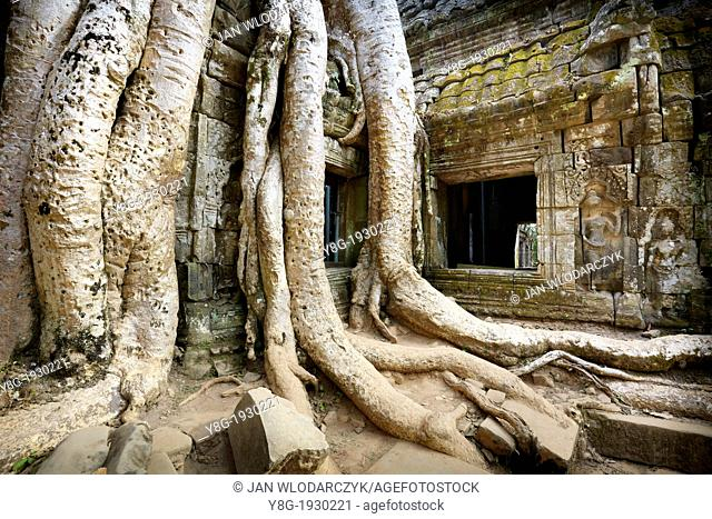 Angkor - roots of a huge tree overgrowing ruins of the Ta Prohm Temple, Angkor Temple Complex, Cambodia, Asia