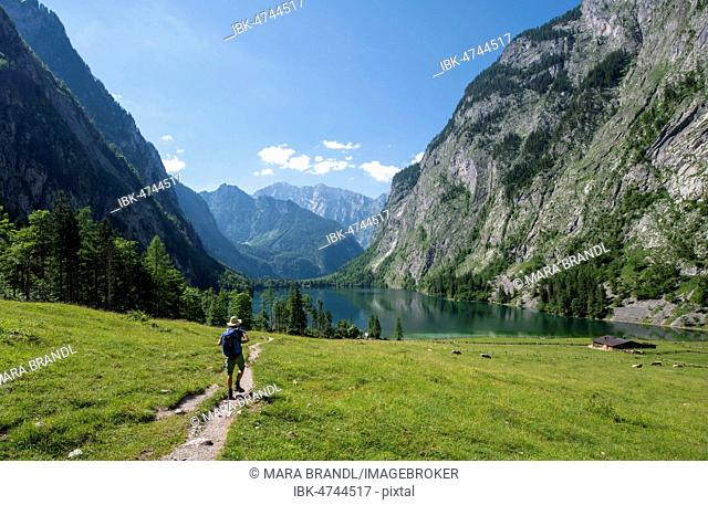 Hiker on the way to the lake Obersee, view over the Obersee, behind the Watzmann, Berchtesgaden National Park, Berchtesgaden Alps, Berchtesgadener Land, Bavaria
