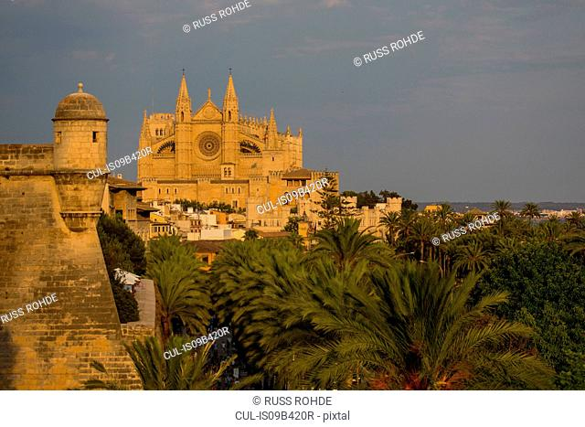 View of La Seu Cathedral and palm trees, Palma de Mallorca , Majorca, Spain
