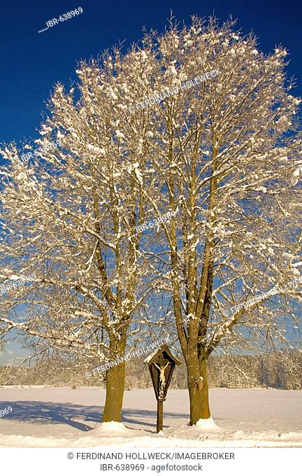 Snow-covered trees and wayside cross, Kochel, Upper Bavaria, Germany, Europe