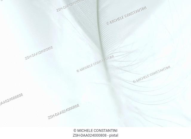White feather against white background