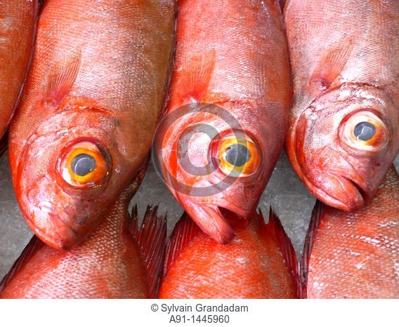 French Polynesia, leeward islands archipelago, island of Tahiti, Papeete market, fishes stall