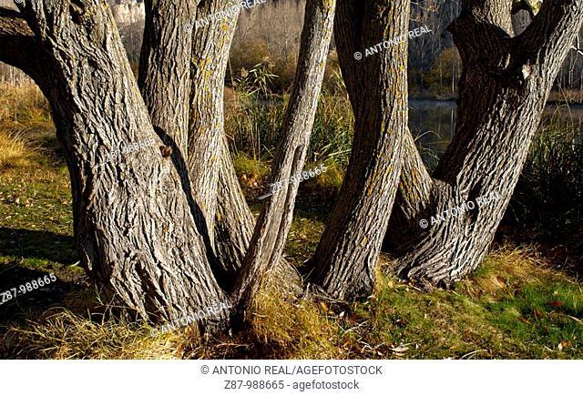 Sierra de Pela y laguna de Somolinos Natural Monument, Somolinos, Guadalajara province, Castilla-La Mancha, Spain