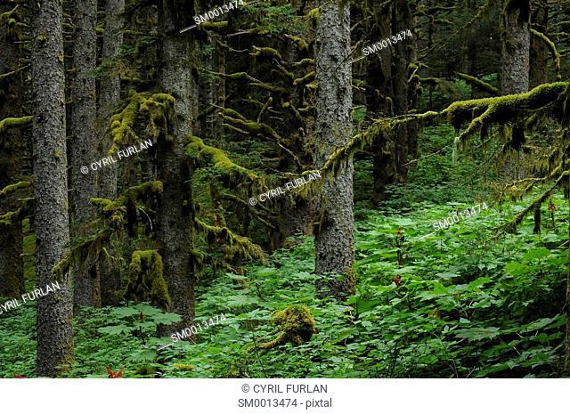 Temperate Rainforest Kodiak Island Alaska