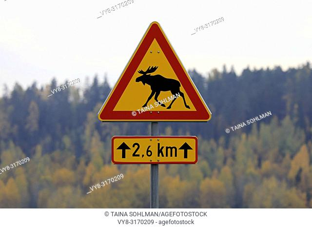 Moose warning traffic sign in Finland with colorful autumn foliage on the background