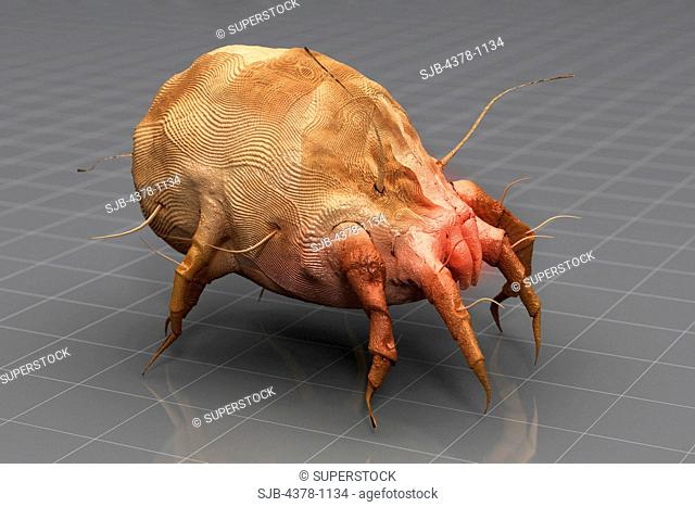 Stylized three-quarter view of a dust mite on a wireframe grid