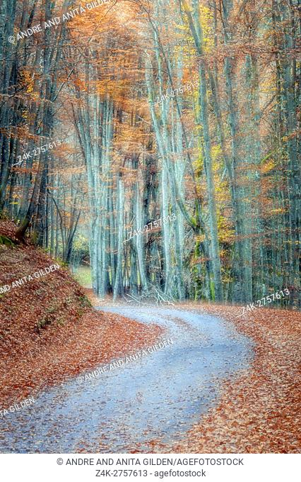 Small mountain road with autumn forest and colorfull leaves. double exposure and HDR, in the French alps