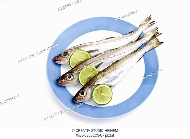 Sandfish on plate, close-up
