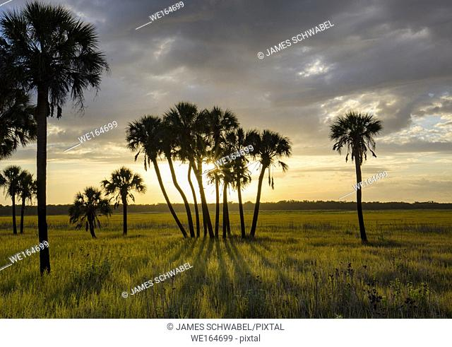 Late afternoon sun casting shadows from palm trees in Myakka River State Park in Sarasota Florida