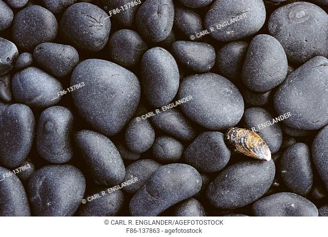 Shell and basalt cobble stones