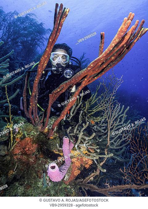 Caribbean Sea Los Roques, woman Scuba-Diver Tour, Underwater, Venezuela, Water Sport