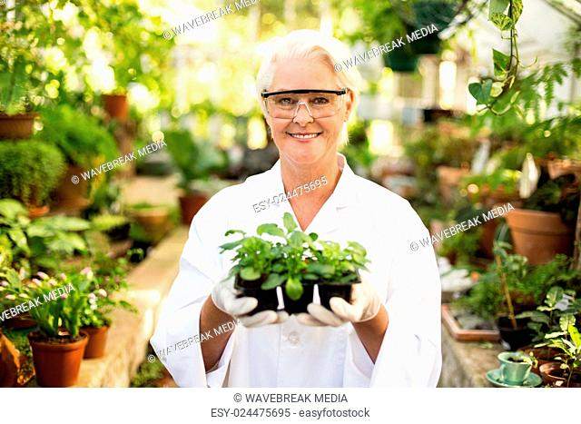 Female scientist holding plants at greenhouse